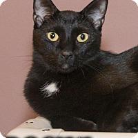 Adopt A Pet :: Rocky - River Edge, NJ