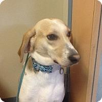 Adopt A Pet :: Sally - Virginia Beach, VA