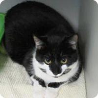 Adopt A Pet :: Tobias $20 - Lincolnton, NC