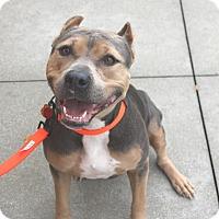 Adopt A Pet :: Mavis - Ft. Myers, FL