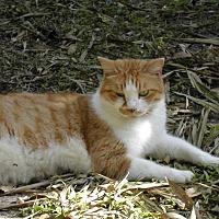 Adopt A Pet :: Roger - Bonita Springs, FL