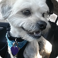 Adopt A Pet :: Rhett - San Dimas, CA