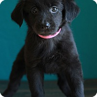 Adopt A Pet :: Paige - Waldorf, MD