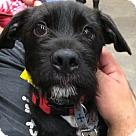 Adopt A Pet :: Nova **ADOPTION PENDING**