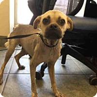 Adopt A Pet :: A387662 - San Antonio, TX