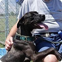Adopt A Pet :: Sweet Pea A31849349 - Westampton, NJ