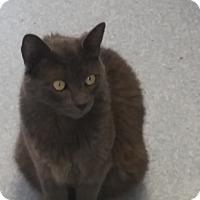 Adopt A Pet :: Poseidan - El Cajon, CA