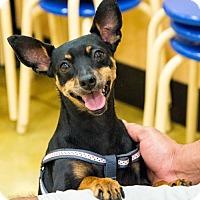 Adopt A Pet :: Lola* - Miami, FL