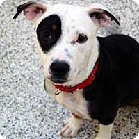 Adopt A Pet :: Babs - Bradenton, FL