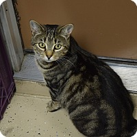 Adopt A Pet :: Melody - Pottsville, PA