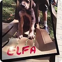 Adopt A Pet :: Elfa - Hohenwald, TN