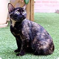 Adopt A Pet :: Melanie - Vancouver, BC
