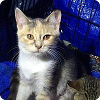 Adopt A Pet :: Cupcake - Charlotte, MI