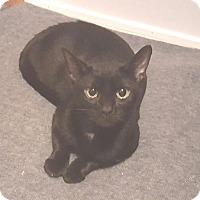 Adopt A Pet :: Patsy - E. Claridon, OH