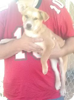 Husky Mix Puppy for adoption in Wytheville, Virginia - Lois