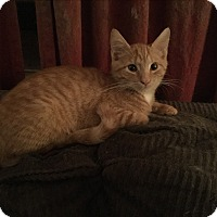 Adopt A Pet :: Spice - Rochester, NY