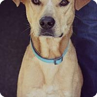 Adopt A Pet :: Max - Fredericksburg, VA