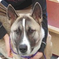 Adopt A Pet :: BRUCE - Missoula, MT