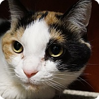 Adopt A Pet :: Nancy - Bethesda, MD