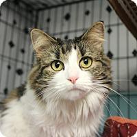 Adopt A Pet :: Zoey - Warwick, RI