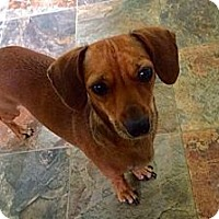 Adopt A Pet :: Mollie - Washington DC, DC