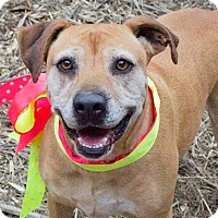 Adopt A Pet :: Holly - Kingston, TN