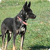 Adopt A Pet :: Tonka - Slanesville, WV