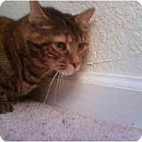 Adopt A Pet :: Venus - Scottsdale, AZ