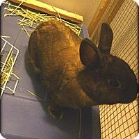Adopt A Pet :: Hoops - Williston, FL