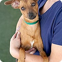 Adopt A Pet :: River - Mission Viejo, CA