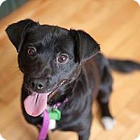 Adopt A Pet :: Taya - Saskatoon, SK