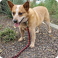 Adopt A Pet :: Zip - Phoenix, AZ