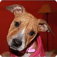 Adopt A Pet :: Emma - Rowlett, TX