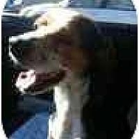 Adopt A Pet :: Milo Dean - Phoenix, AZ