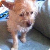 Adopt A Pet :: Cookie - Marlton, NJ