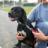 Adopt A Pet :: Hayley - Lancaster, OH