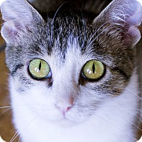 Adopt A Pet :: Claudette - Chicago, IL