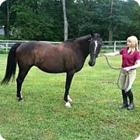 Adopt A Pet :: Melody - Hewitt, NJ