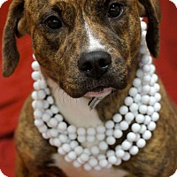 Adopt A Pet :: Blanche - Toms River, NJ