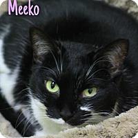 Adopt A Pet :: Meeko - Baton Rouge, LA