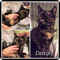 Adopt A Pet :: Destiny - Breinigsville, PA