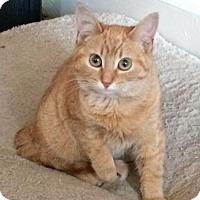 Adopt A Pet :: Sherlock - Livonia, MI