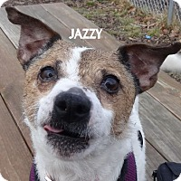 Adopt A Pet :: JAZZY--SO SNAZZY! - Lapeer, MI