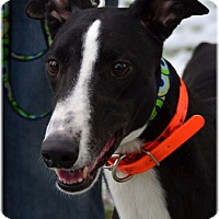 Adopt A Pet :: Bailey - Harrisburg, PA