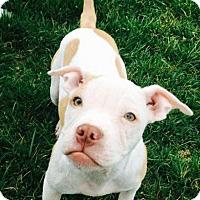 Adopt A Pet :: Ethel - Dayton, OH