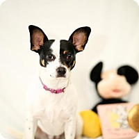 Adopt A Pet :: Minnie-REDUCED ADOPTION FEE - Little Rock, AR