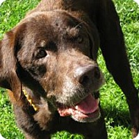 Adopt A Pet :: Rusty - San Francisco, CA