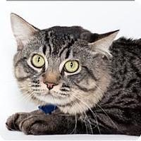 Adopt A Pet :: Hitchcock - San Luis Obispo, CA