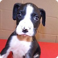 Adopt A Pet :: Stud - Oxford, MS