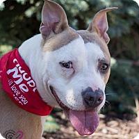 Adopt A Pet :: Beau - Grand Rapids, MI